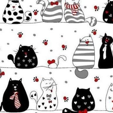 szalone koty na białym 139